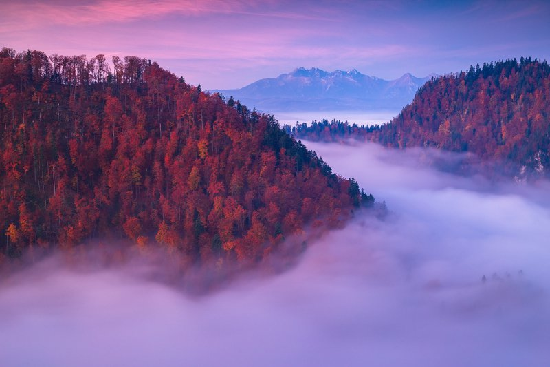 pieniny,tatry,polska,national,park,poland,rydzewski,35photo,award, 6d,canon,mgły,fog,autumn,fall,landscape,krajobraz, Pieniny National Parkphoto preview