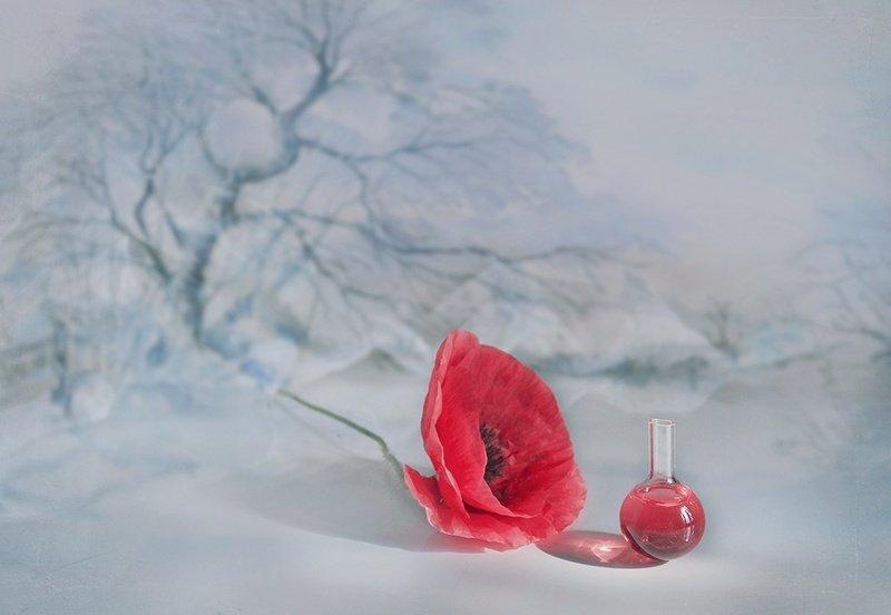 Зима лето холодно тепло снег маки улыбка любовь  Летний эликсирphoto preview