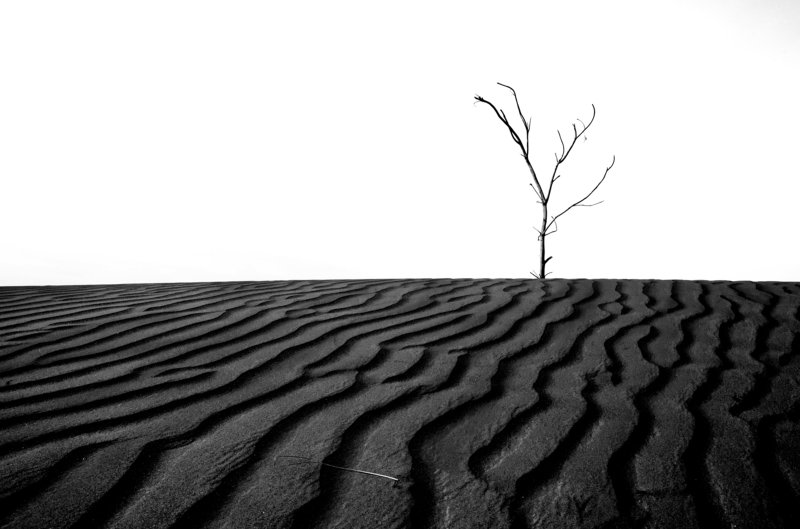 desert,black and white,nature Alone waiting for youphoto preview