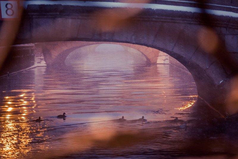 Розовые сны Петербужских мостовphoto preview