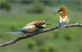 Совсем милые птички )