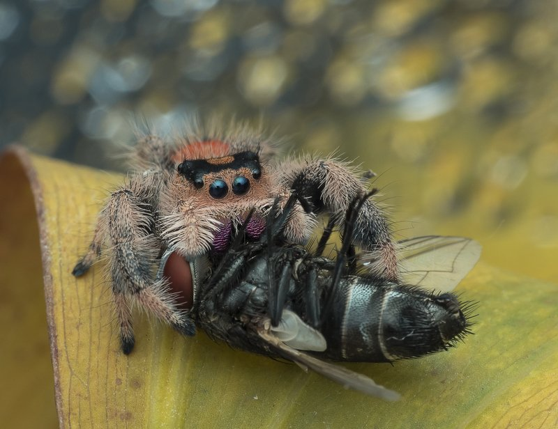 #spider#colors#macro Enjoy My Lunchphoto preview