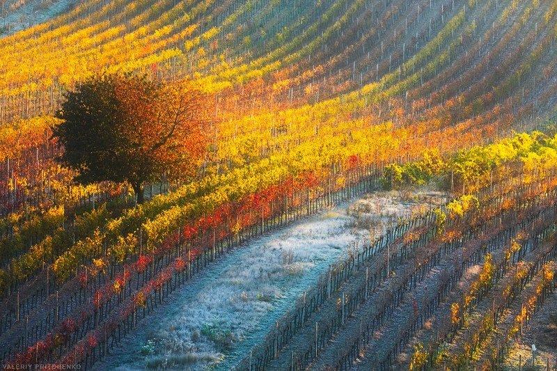 Morava, South Moravia, Czech Republic, landscape, sunrise, природа, пейзаж, утро, Моравия, Южная Моравия Отступала холодная ночьphoto preview
