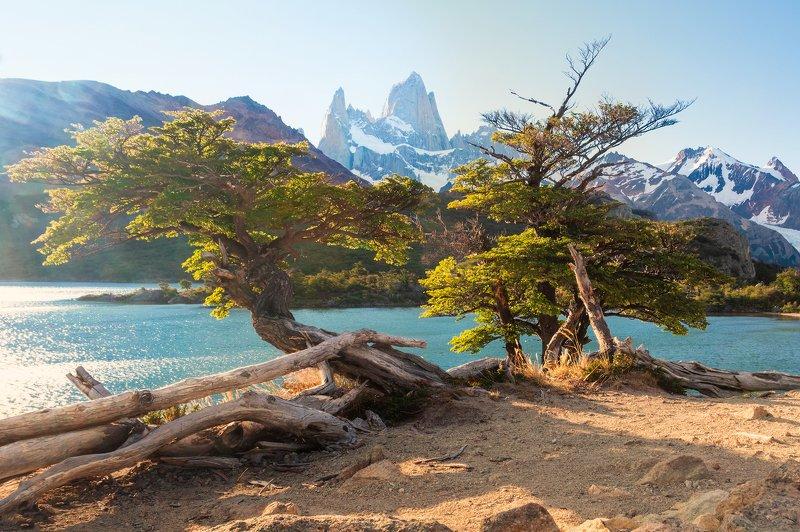 landscape, patagonia, argentina, mount, park, tree, view, lake, fitzroy, chalten Chalténphoto preview