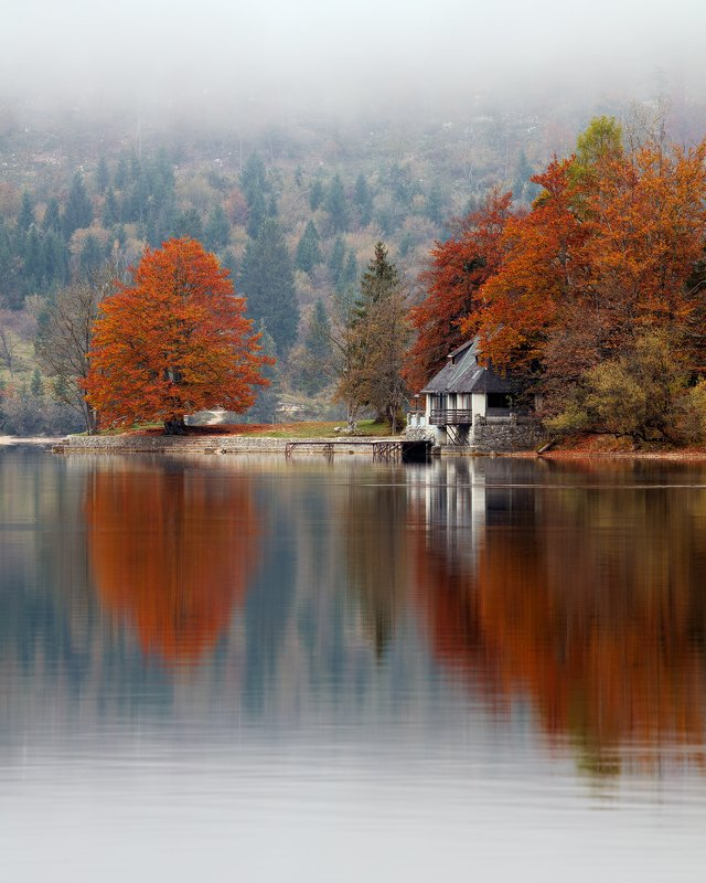 slovenia, lake, reflection, trees, colors, autumn, fog, mist, beautiful, nature, water Foggy Morning by the Lakephoto preview