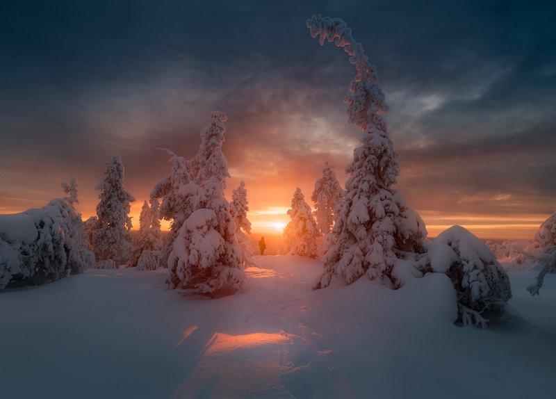 зима, снег, елка, вечер, закат, небо, солнце, финляндия Проводы солнцаphoto preview