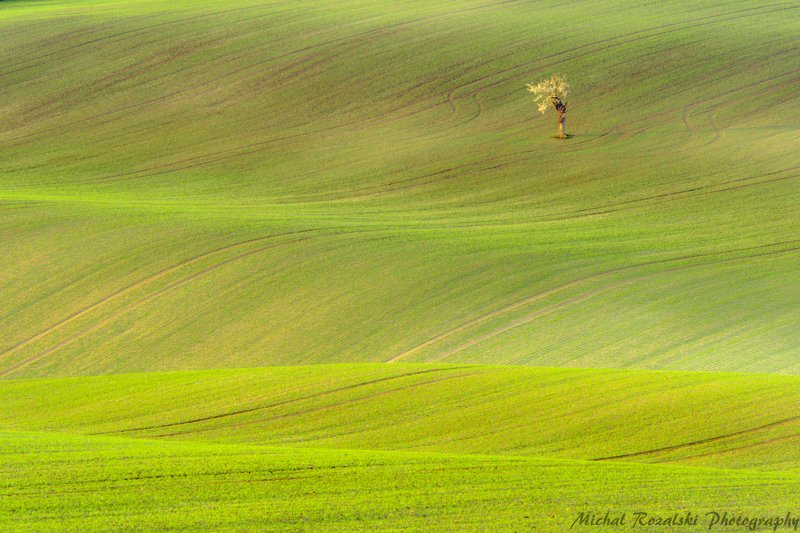 tree, ,spring, ,green, ,season, ,fields, ,moravia, , Lonely treephoto preview