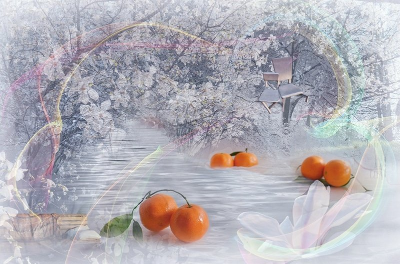Зима весна снег цветы мандарины радость  Мандариновый сон photo preview