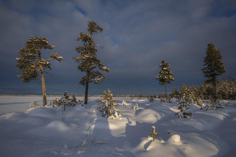 зима, мороз, снег. свет, день, Декабрьphoto preview