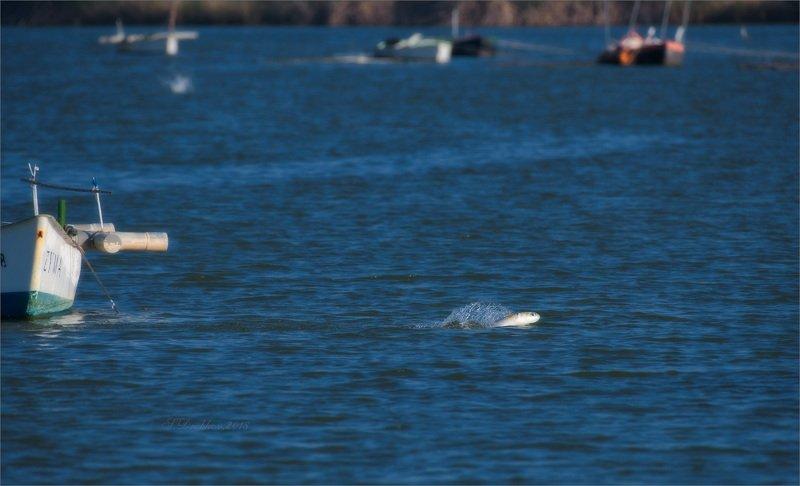 рыбы, озеро, вода, лодки, юмор Пока рыбаки празднуют Новый годphoto preview