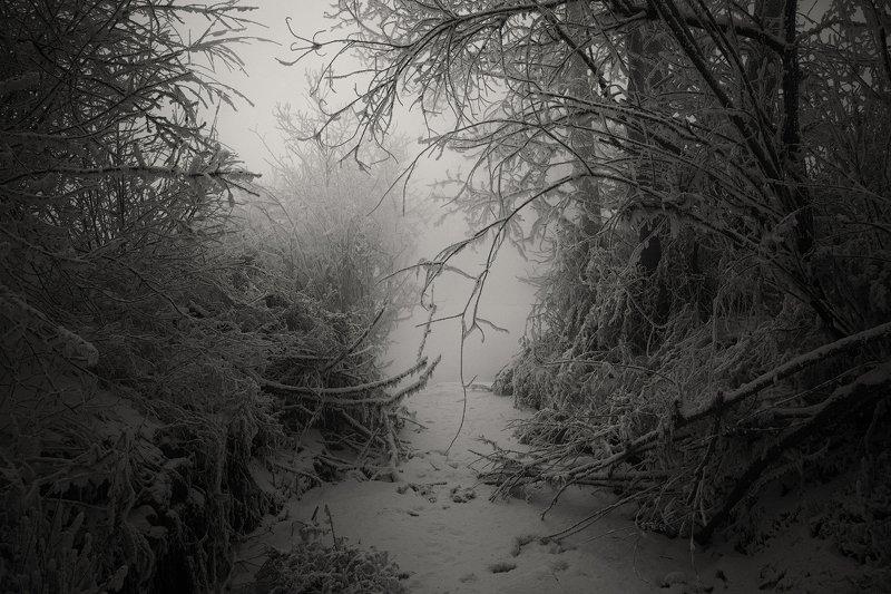 Тропинка в туманную лощинуphoto preview