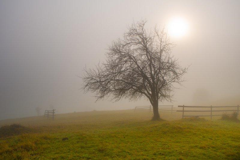 карпаты. осень. туман. рассвет Одиночество в туманеphoto preview