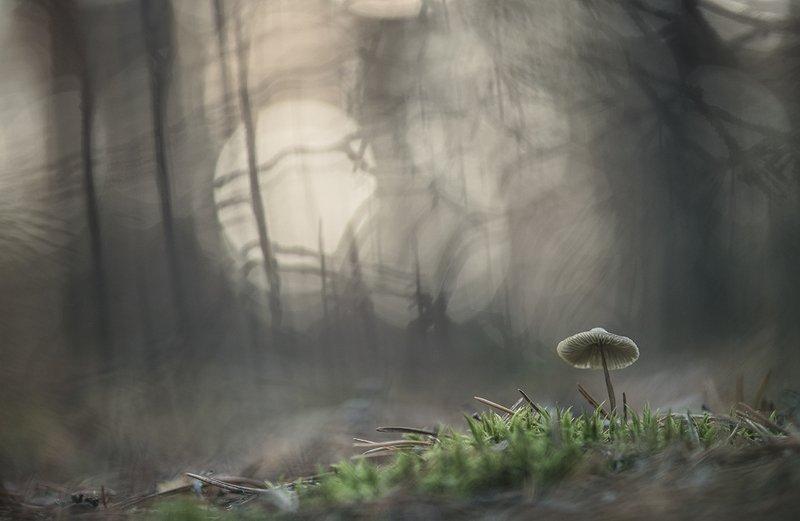 макро, гриб, поганочка, утро, морозец, свет, цвет, воронеж Морозным утром...photo preview