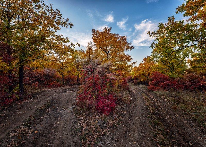 донбасс, осень, природа, деревья, облака, шахта, Донбасс осеннийphoto preview