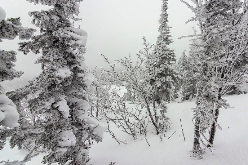 снег, иней, снежные узоры, мороз, рябина, кедры, берёзы, гора зелёная, зима, шерегеш, горная шория, сибирь Pro фактурный Шерегешphoto preview