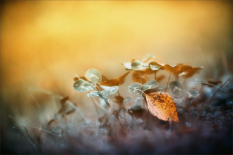 В плену осенней пеленыphoto preview