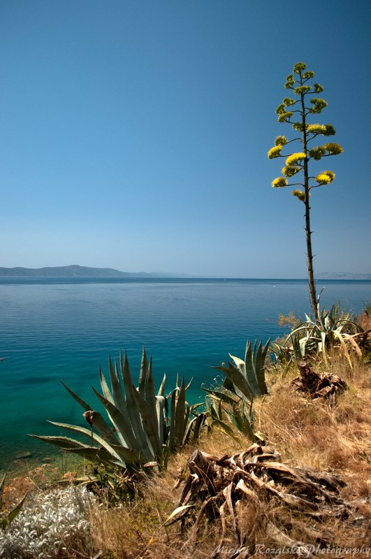 agave, ,summer, ,sunshine, ,sea, ,holidays, ,croatia Agavephoto preview
