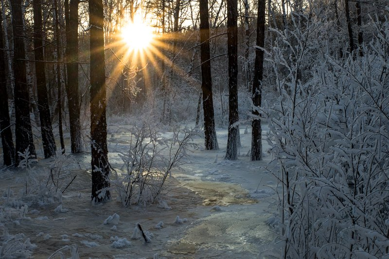 Прогулка в январском лесуphoto preview