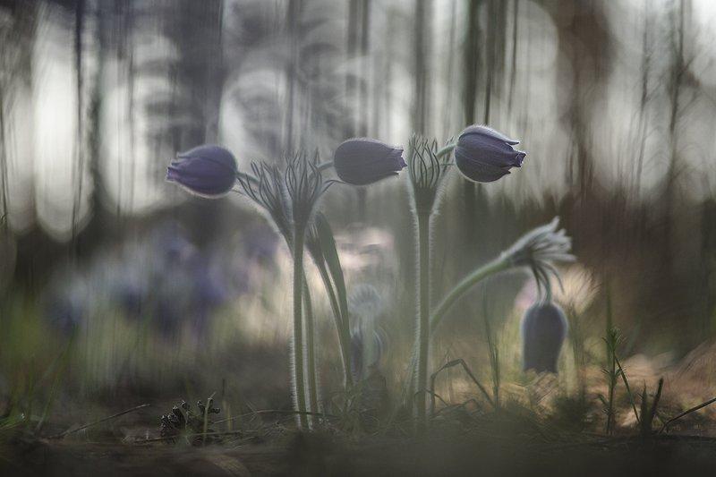 сон трава, свет, цвет, весна, апрель, маклок, воронеж, геннадий мещеряков В моих снах...photo preview