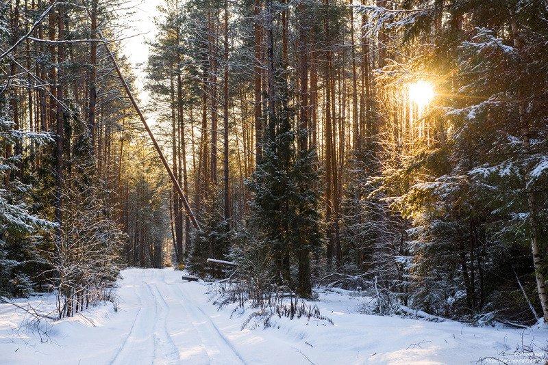 Зима в лесуphoto preview