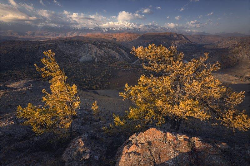Алтайская классикаphoto preview