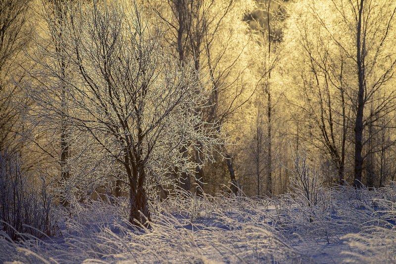 изморозь, утро, Рождество Рождественское утроphoto preview