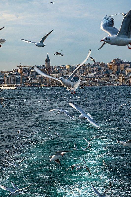istanbul, bosphorus, seagull, turkey, стамбул, босфор, турция, чайка [bosphorus]photo preview