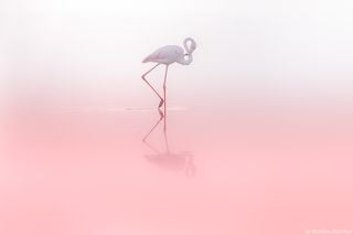 Фламинго 8...