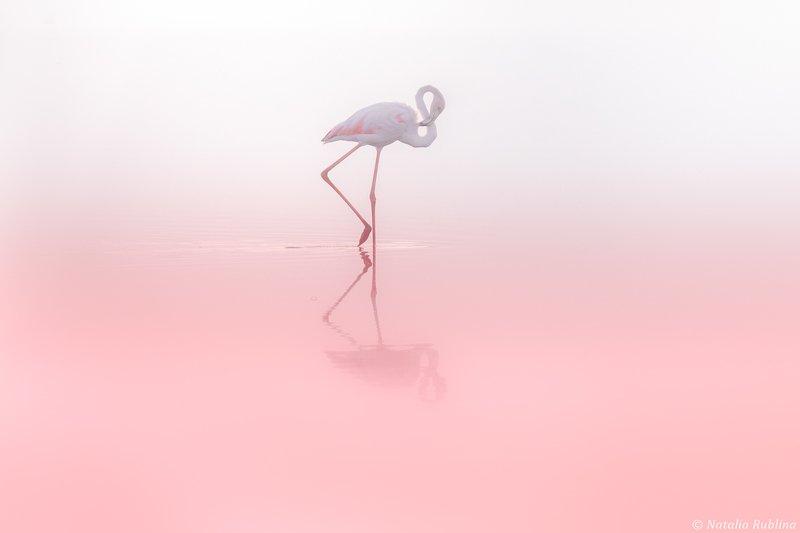 фламинго,птицы,животные,минимализм,природа,умиротворение,розовый,птица Фламинго 8...photo preview