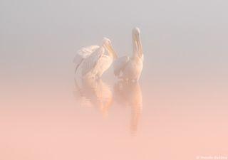 Два Ангела в утреннем тумане ...