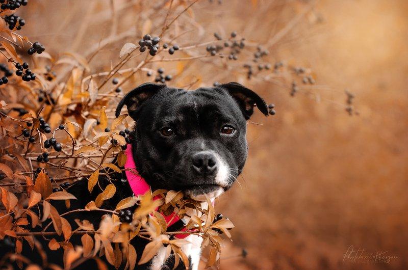 осень, портрет, движение, собака, анималистика Бестаphoto preview
