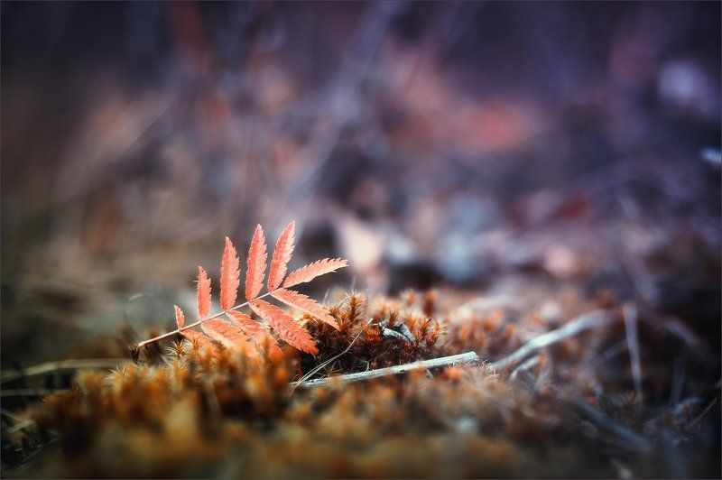 Сказочная осеньphoto preview