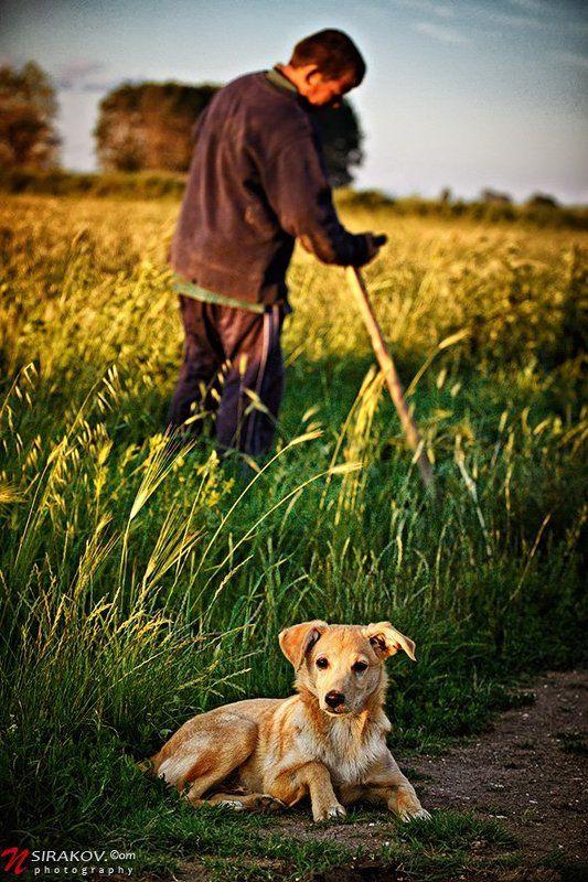 bulgaria, landscape, field, man, dog, horse, autumn Осенное....photo preview