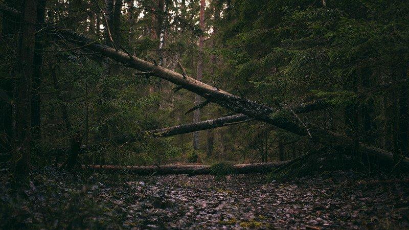 Дерево без мишекphoto preview