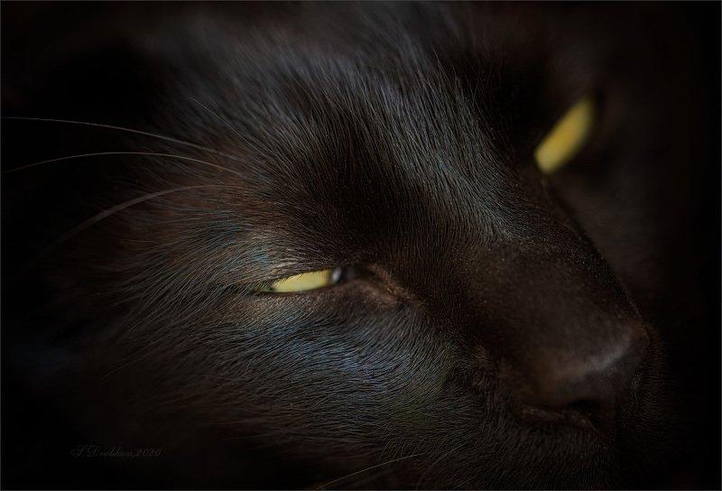 кошки, животные, портрет, чёрный кот Sweet dreamsphoto preview