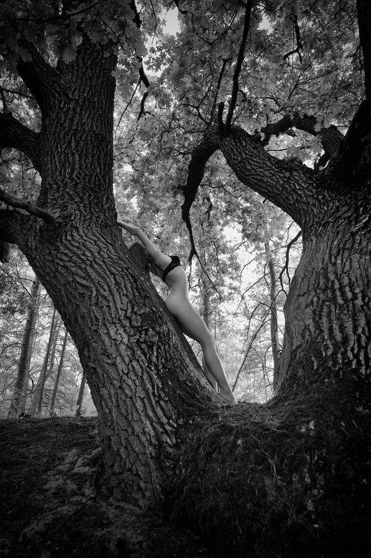 konstantin skomorokh константин скоморох kiev киев severodonetsk северодонецк ню art nude fine art ukraine Forest Nymphphoto preview