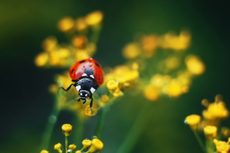 macro bokeh insect nature helios ***photo preview