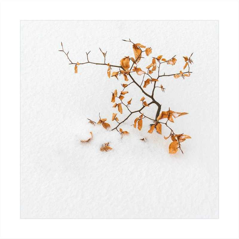 Весна, лето, осень, зима.. и снова веснаphoto preview