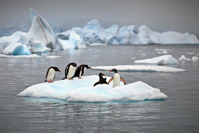 Пингвиньи истории - 1photo preview