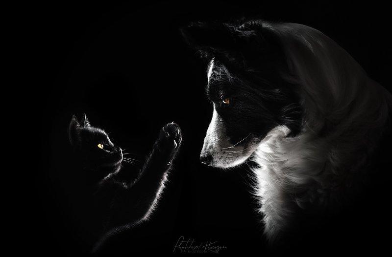 портрет, анималистика, черный фон Друзьяphoto preview
