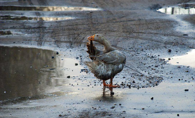 А лужа грязная была ...photo preview