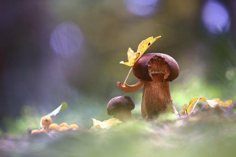 Гриб.лес.осень.лист. Под зонтикомphoto preview