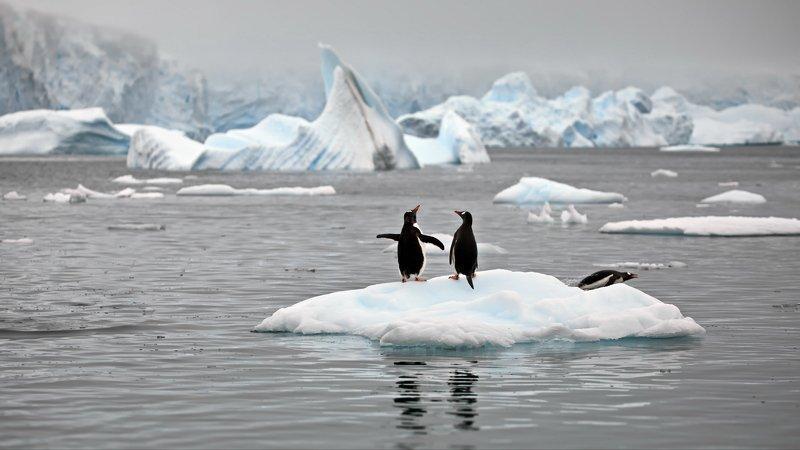 Пингвиньи истории - 2photo preview