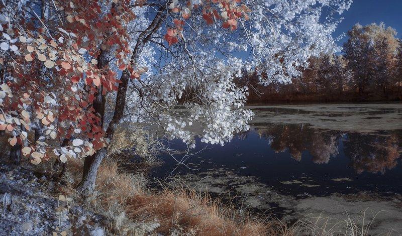 пейзаж, инфракрасная фотография, 630nm Цыганка-осень.photo preview