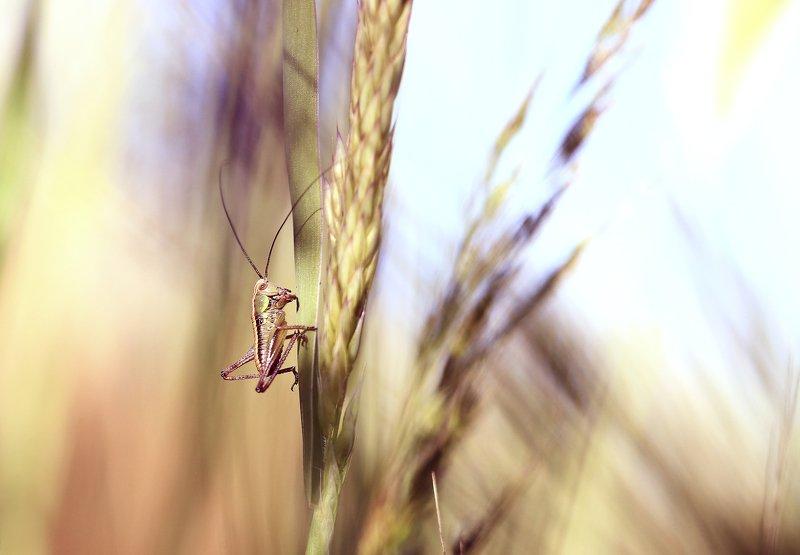 Лето.солнце.поле. В траве сидел кузнечик.photo preview