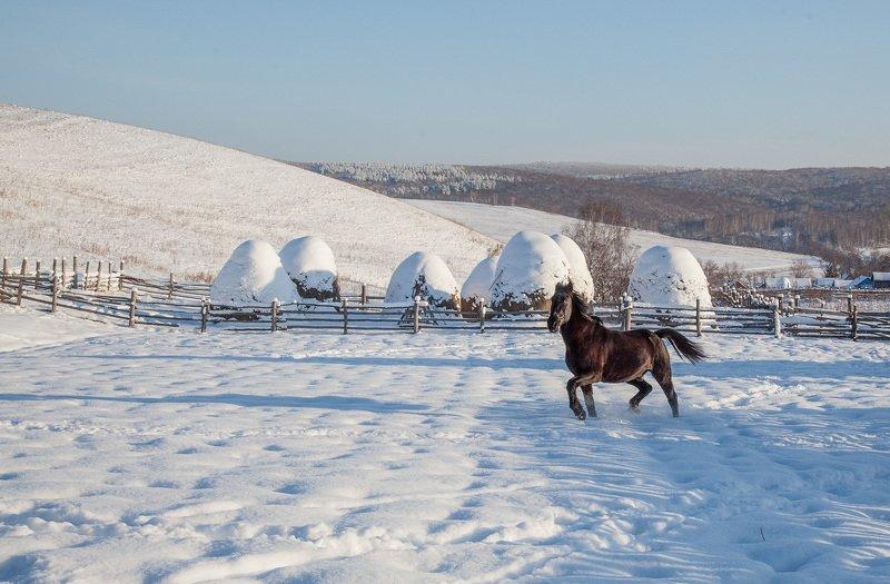 пейзаж,зима,снег,горы,деревня, лошадь ***photo preview