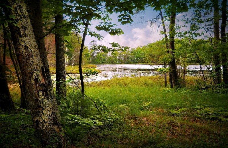 Летом в лесу...photo preview
