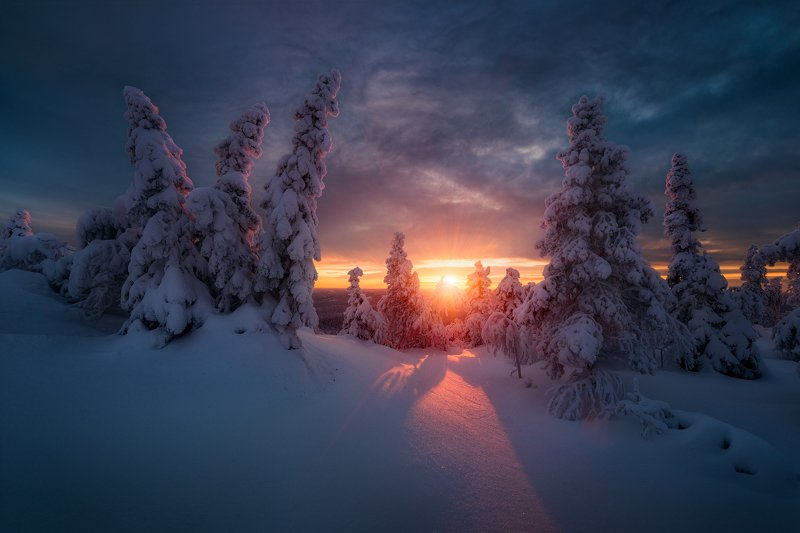 зима, снег, закат, ёлки Зимнее солнцеphoto preview