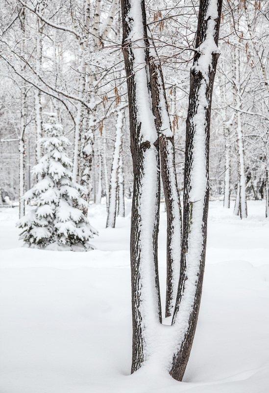 снег,зима,пейзаж,деревья Зимняя графикаphoto preview