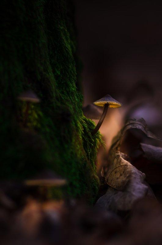 Чудо в январском лесуphoto preview